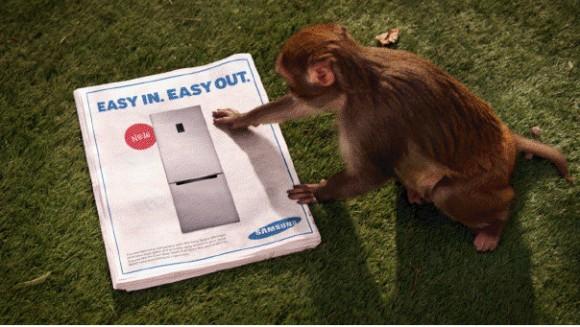 refrigerateur-samsung-pub-singes
