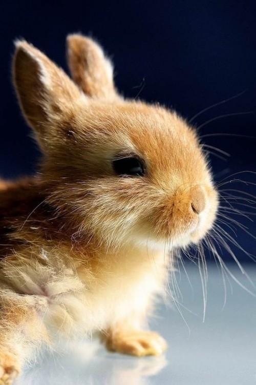 non bonpoint  les animaux ne sont pas des goodies