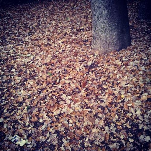 automne-feuilles-mortes
