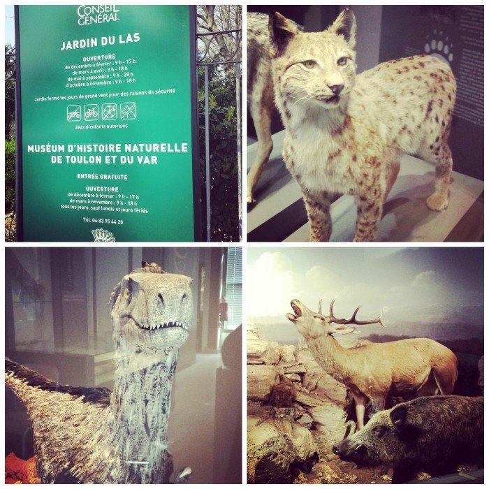 Musée d'histoire naturelle de Toulon