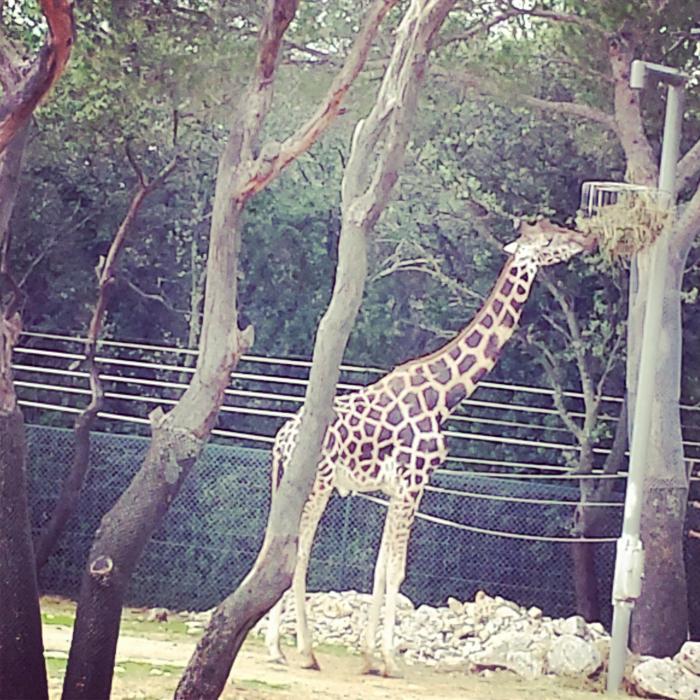 Week-end en famille à Montpellier : Zoo du Lunaret