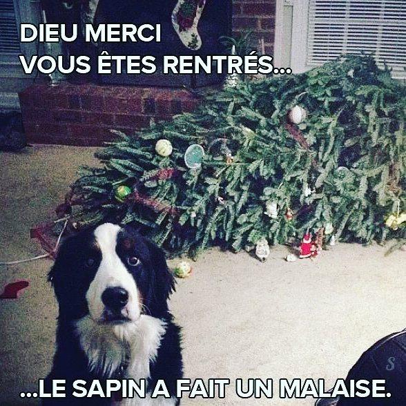 Humour chien à Noël et sapin