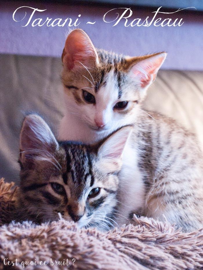 avoir deux chatons