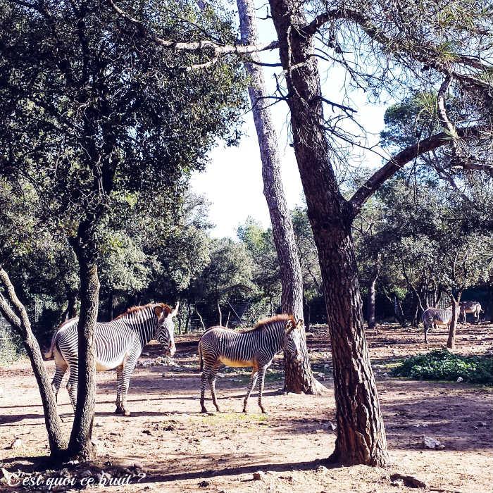 WE en famille à Montpellier (adresses sympas : le zoo gratuit du Lunaret