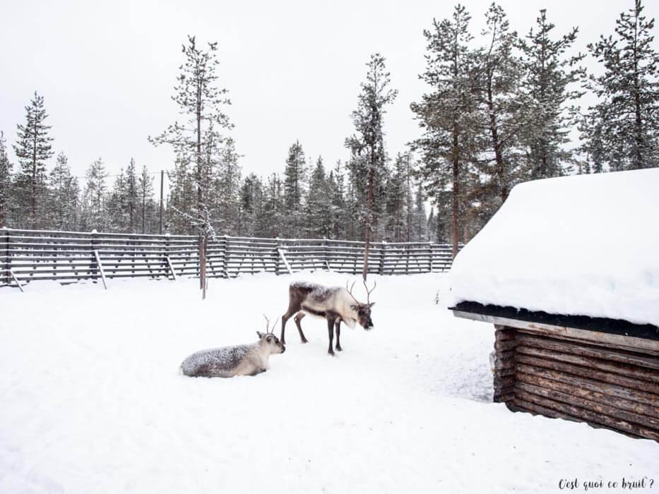 Laponie Finlandaise : motoneige et rennes