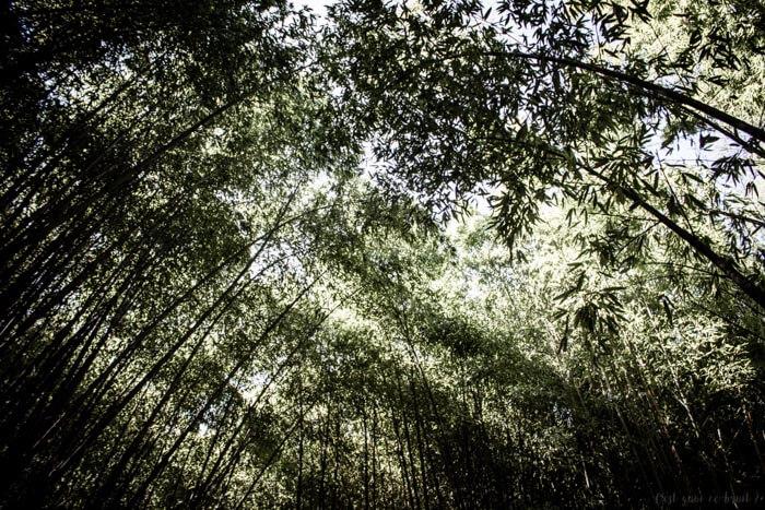 bambouseraie-anduze-familytrip-4