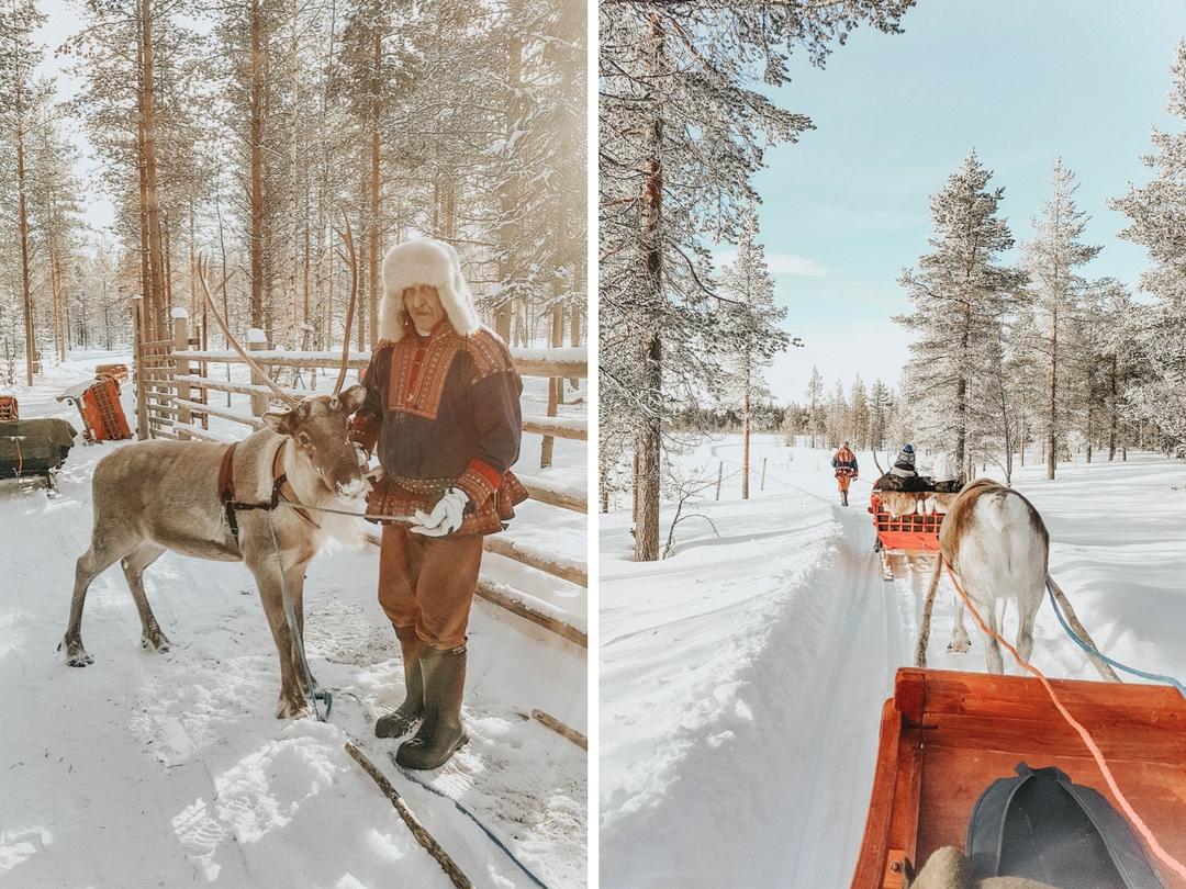 Balade en rennes en Laponie Finlandaise